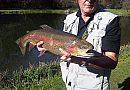 Albury Estates Fisheries