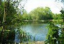 Woodhall's Pond