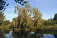 Paulton Lakes