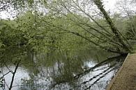 Mudeford Wood Angling Club