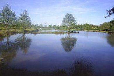 Highampton Trout and Coarse Lakes - Fisharound.net