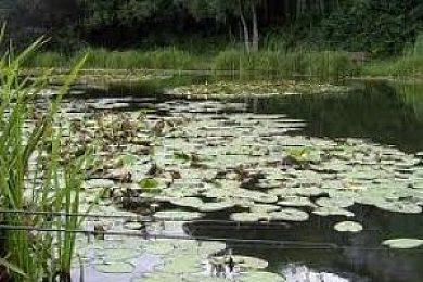 Half round ponds swansea united kingdom fish around for Round fish pond