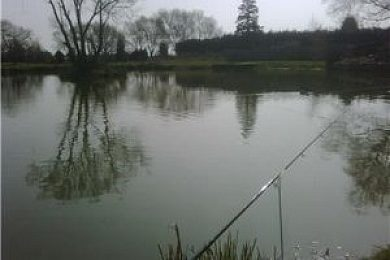 Stambridge Fisheries - Fisharound.net