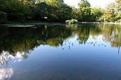 Keston Ponds  - Fisharound.net
