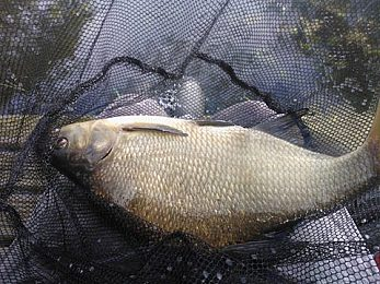 Little Mere Dunham Massey Angling Club - Fisharound.net