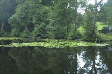 Montreal Park Lake - Fisharound.net