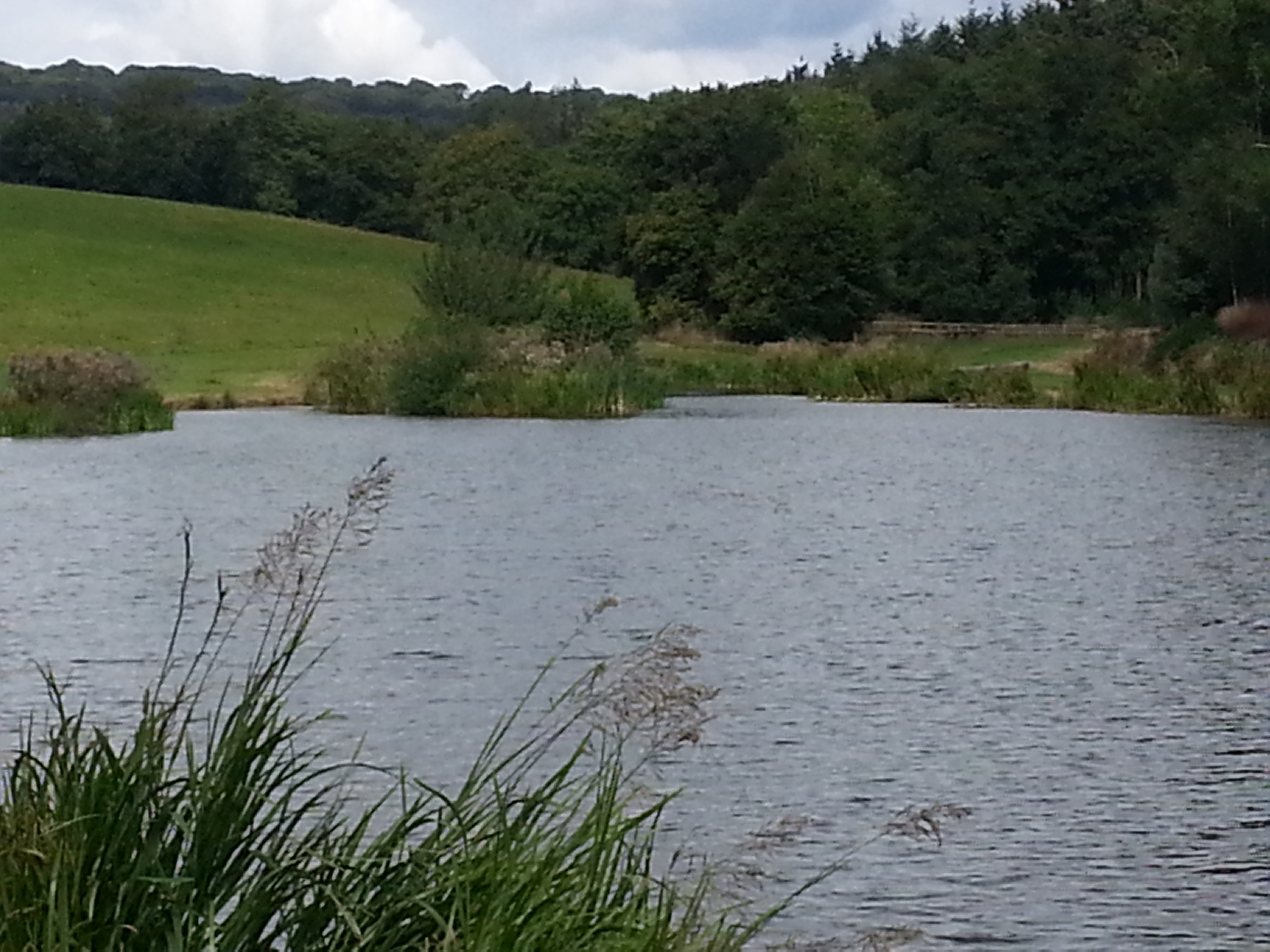 Lydney United Kingdom  City pictures : Beanhill Trout Lake Fishery, Lydney, United Kingdom Fish Around
