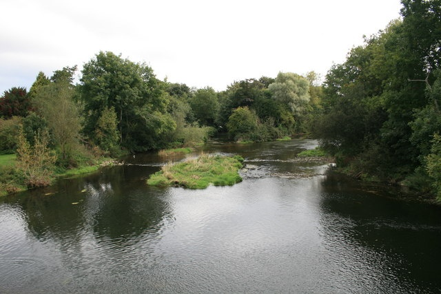 growth of dace and roach in Distribution and variation in the growth of roach, rutilus rutilus (l), and dace, leuciscus leuciscus (l), in a river catchment in south-west england.