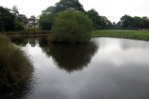 moss farm pools over peover united kingdom fish around