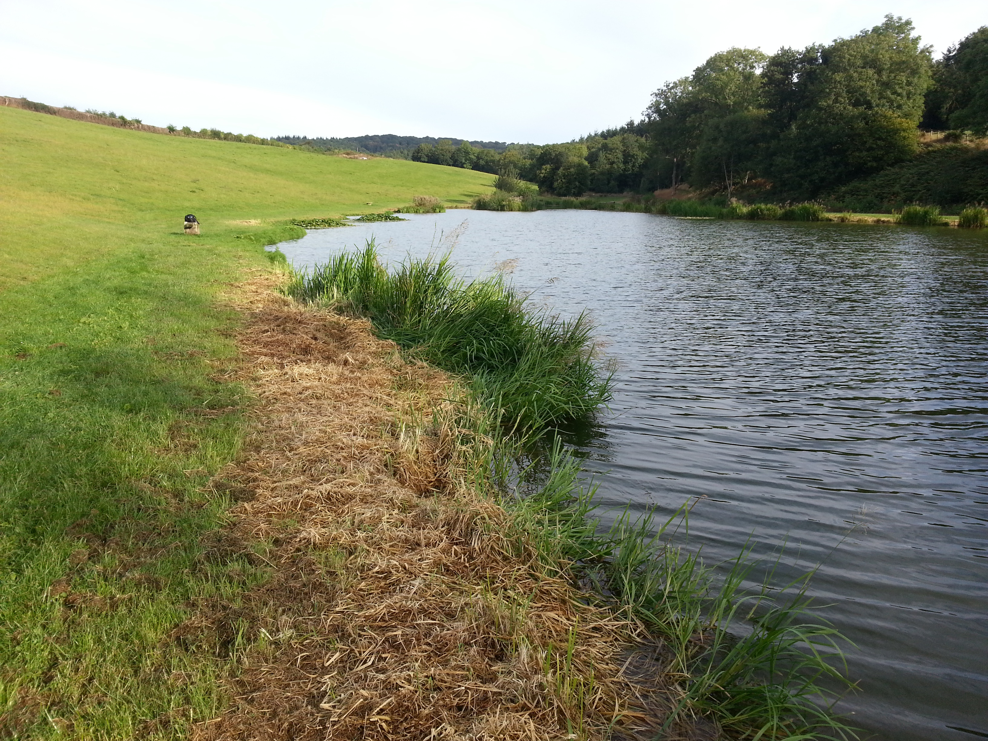 Lydney United Kingdom  city images : Beanhill Trout Lake Fishery, Lydney, United Kingdom Fish Around