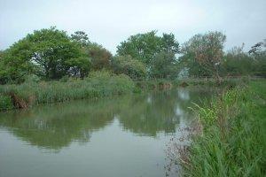 Magic Lakes Waltham Abbey United Kingdom Fish Around