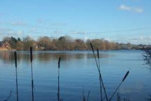 Nazeing Meads Waltham Abbey United Kingdom Fish Around