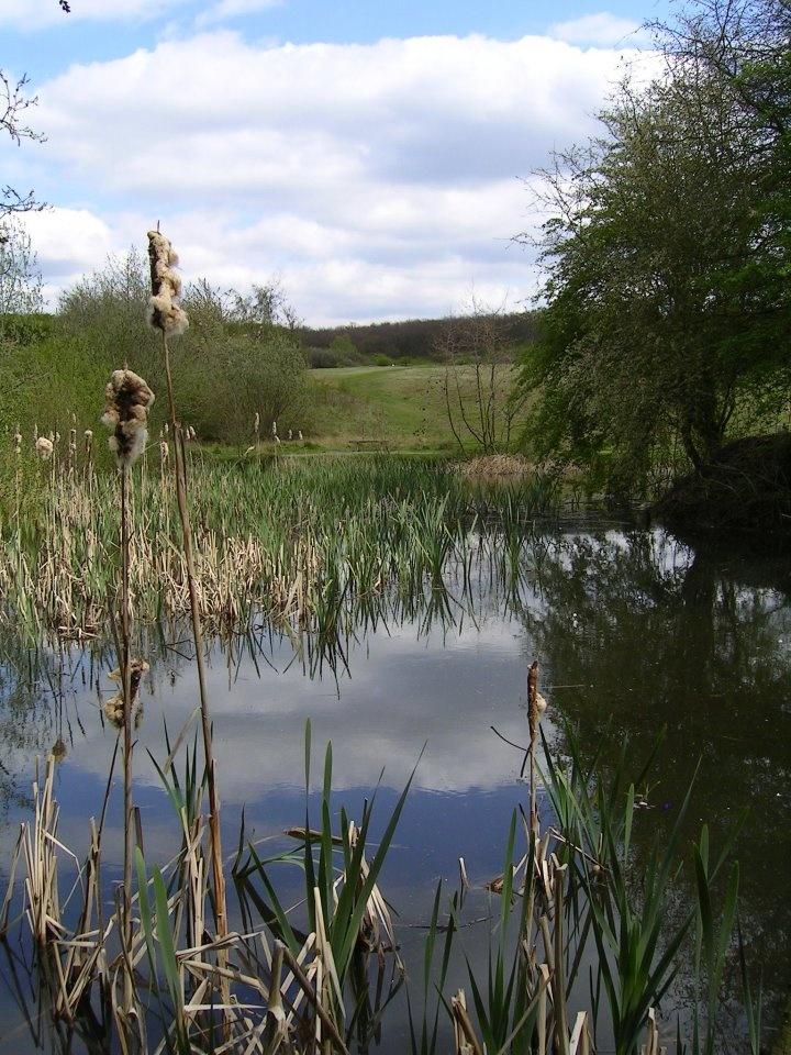 Fermyn woods country park brigstock kettering united for Koi pond kettering