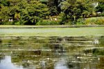 Roath Park Lake in Cardiff closed to visitors due to algae warning