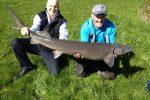 Massive sturgeon caught on pole at Yorkshire lake